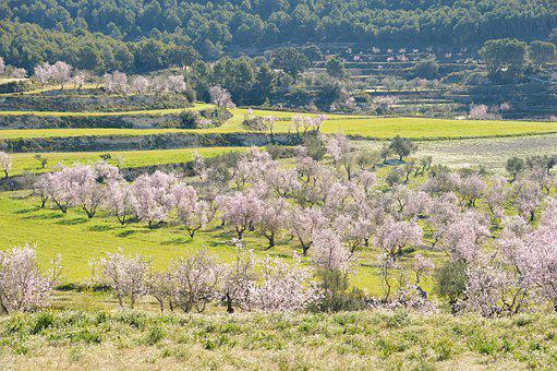 Nature, Trees, Landscape, Green, Almond, Blossom