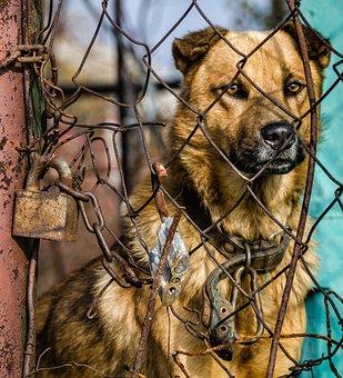 Pets, Dog, Animal, Security, Sadness, Protection, Fence