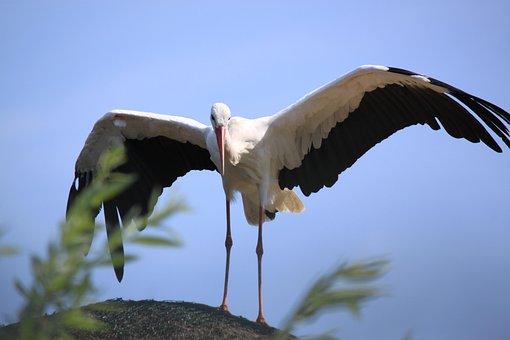 Stork, Zoo, Bird, Nature, Bill, Animal World