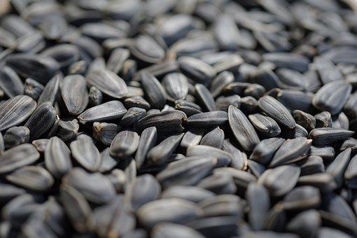 Sunflower Seeds, Cores, Eat, Seeds, Edible, Bird Seed