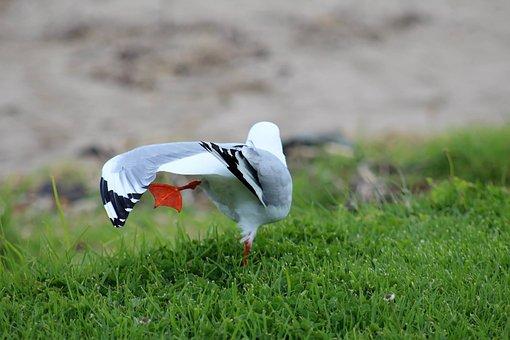 Seagull, Bird, Wildlife, Nature, Blue, Avian, Sitting