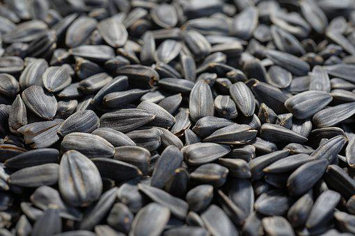 Nuclear, Sunflower Seeds, Eat, Seeds, Edible, Bird Seed