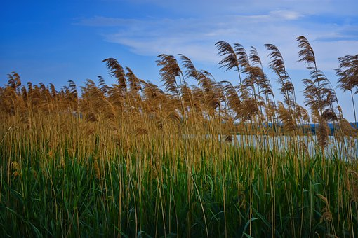 Landscape, Farm, Lake, Countryside, Nature, Grass