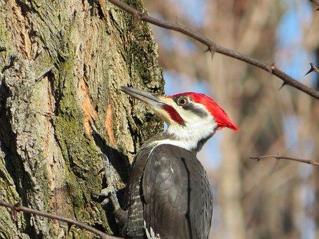 Woodpecker, Bird, Feathers, Nature, Garden, Animal