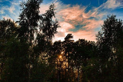 Sunset, Sweden, Evening, Nature, Sky, Landscape, Forest