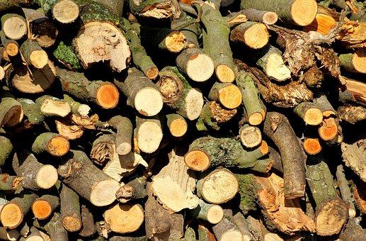 Wood, Tree, Cut The, Fuel