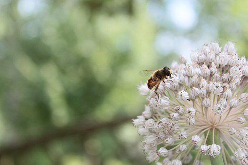 Bee, Nature, Honey, Bees, Insect, Pollen, Spring