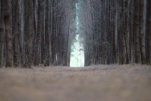 Tree, Na, Nature, Landscape, Sky, Forest, Flowers