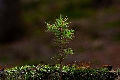 Nature, Forest, Tree Stump, New Tree, Landscape, Green