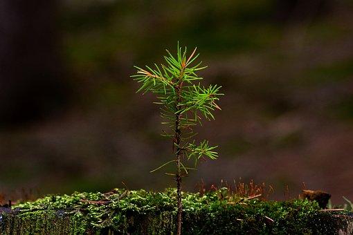 Nature, Forest, Tree Stump, New Tree