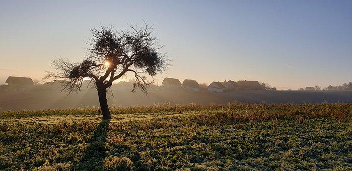 Tree, Abendstimmung, Fog, Sunset, Rhön