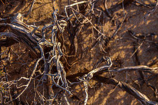 Root, Dry, Branches, Filigree, Nature, Tree, Wood