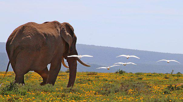 South Africa, Elephant, Reserve, Safari