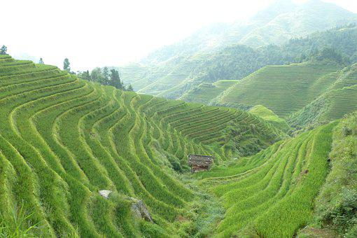 Has Been Used As A, Risterasser, Terrace Farming, China