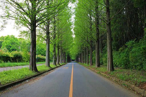 Road, Roadside Trees, Traveling, Japan, Driving