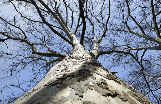 Tree, Turntable, High, Perspective, The Angle, Small