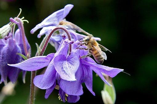 Flower, Violet Colour, Plants, Bee