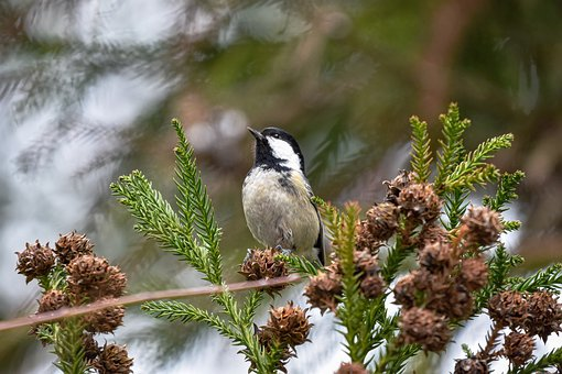 Animal, Forest, Wood, Nuts, Bird