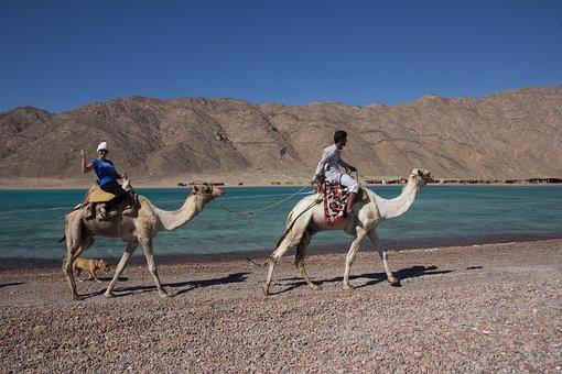 Camel, Camel Ride, Sinai, Desert, Lagoon, Vacations