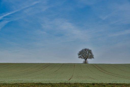 Sky, Clouds, Tree, Field, Morning, Frozen, Landscape