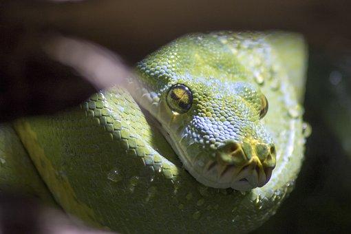 Snake, Zoo, Reptile, Animal World, Dangerous, Head