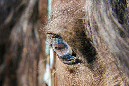 Horse, Eye, Animal, Head, Horse Head, Close Up, Mammal