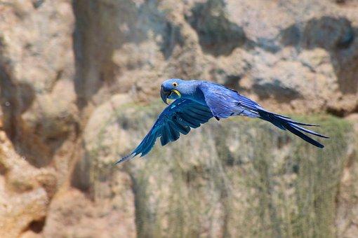 Parrot, Blue, Zoo, Parrots, Bird, Feather, Color, Ara