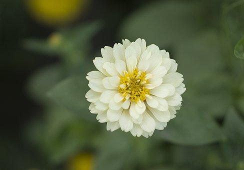 Yellow, Flower, Sunflower, Spring, Blossom, Bloom