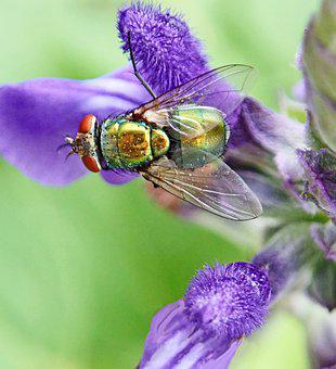 Fly, Insect, Blow Fly, Plant, Flower