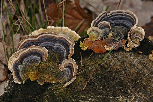 Tree Stump, Tree Fungus, Autumn, Forest, Nature
