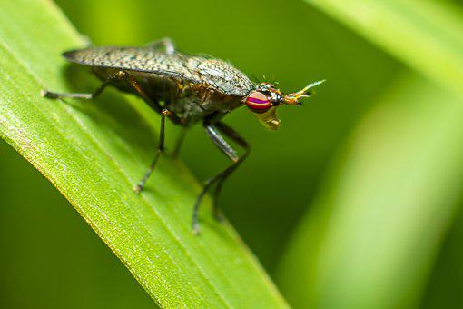 Fly, Red, Compound, Eyes, Green, Body, Tree, Wall