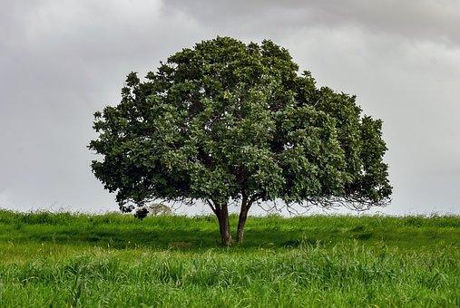 Tree, Meadow, Landscape, Nature, Green