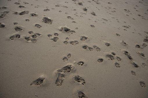 Beach, Iz, Foot, Sand, Background, Pattern, Macro