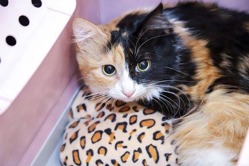 Cat, Pet, Kitten, Adorable, Animal
