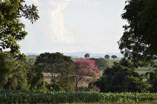 Brazil, Nature, Landscape, Sky, Tourism