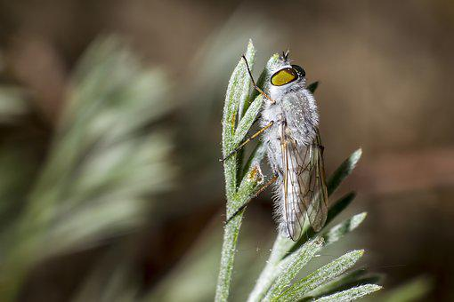 White, Fly, Insect, Portrait, Macro, Closeup, Nature