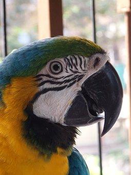 Blue, Yellow, Macaw, Mumbai, Bird, Wildlife, Eye, Beak