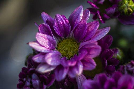 Sun, Sunflower, Bloom, Nature, Blossom