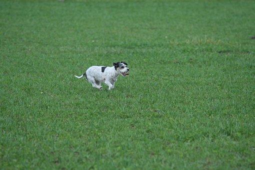 Dog, Prairie, Grass, Animals, Nature, Small