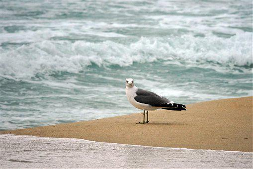 Seagull, Sea, Nature, Bird, Water, Beach, Wave, New
