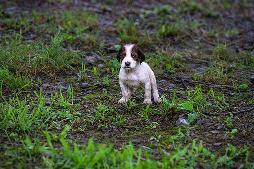 Dog, Lonely, Wet, Animal, Pet, Puppy, Poor, Sad