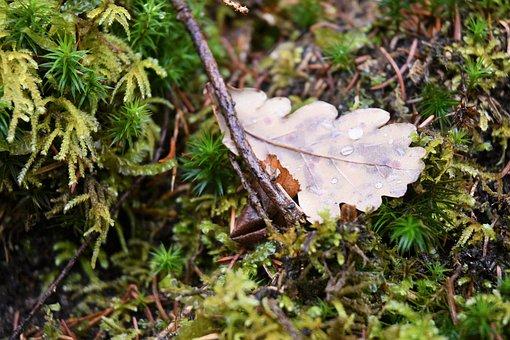 Forest, Forest Floor, Pine, Understory, Moss, Autumn