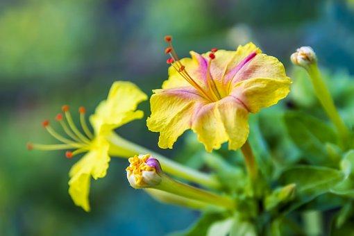 Yellow, Flower, Nature, Spring, Summer, Garden, Plant