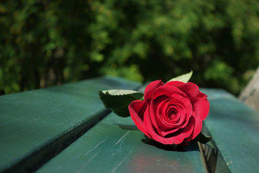 Red Rose, Green Bench