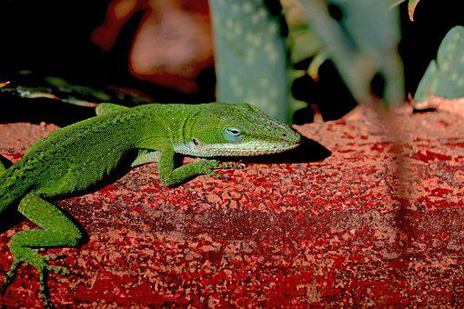 Lizard, Reptile, Scale, Pottery, Red, Cactus, Nature