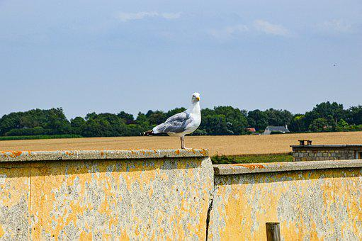 Seagull, Birds, Wall, Vacations, Wing, Flying, Freedom