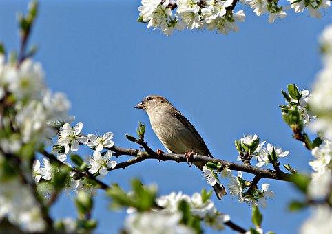 Flowers, Frühlingsanfang, Bird, Spring