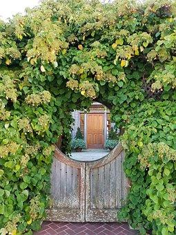 Gate, Michigan, Lake, Ivy, Summer, Nature, Architecture