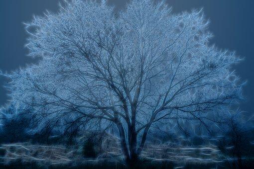 Tree, Highlights, Fog, Lighting