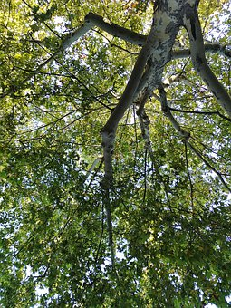 Tree, Nature, From The Bottom Looking